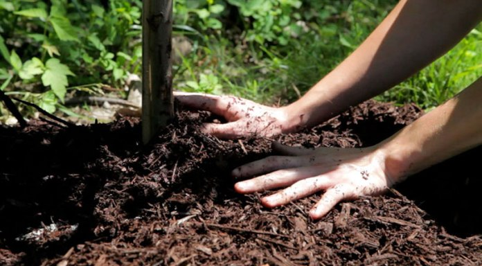 planting-a-tree--banner-3