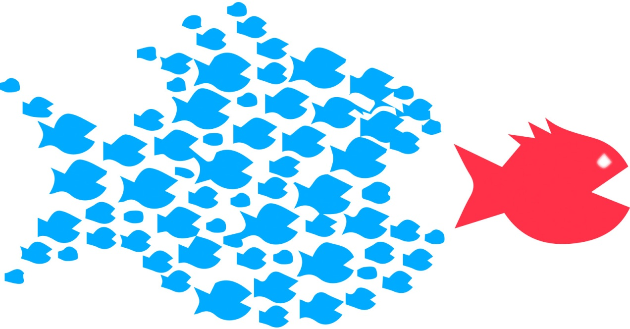 organize_blue_red_fish